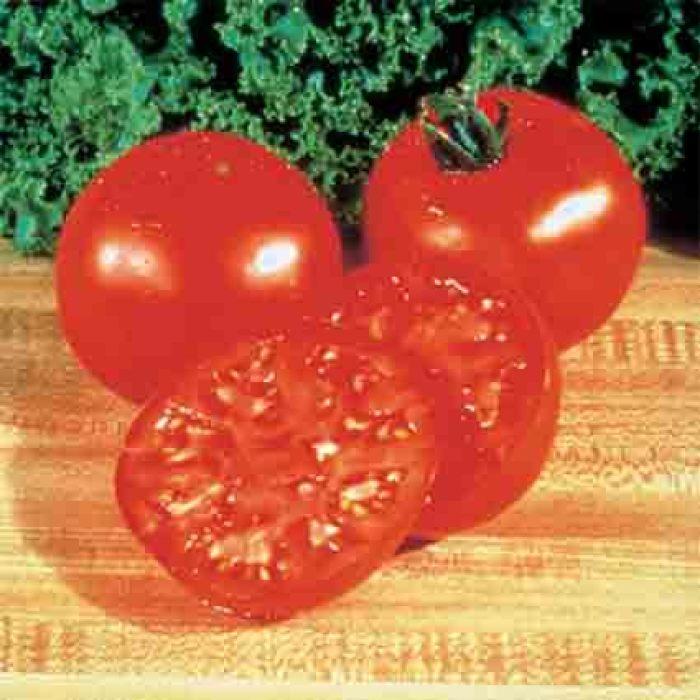Burpee Big Boy Hybrid Tomato