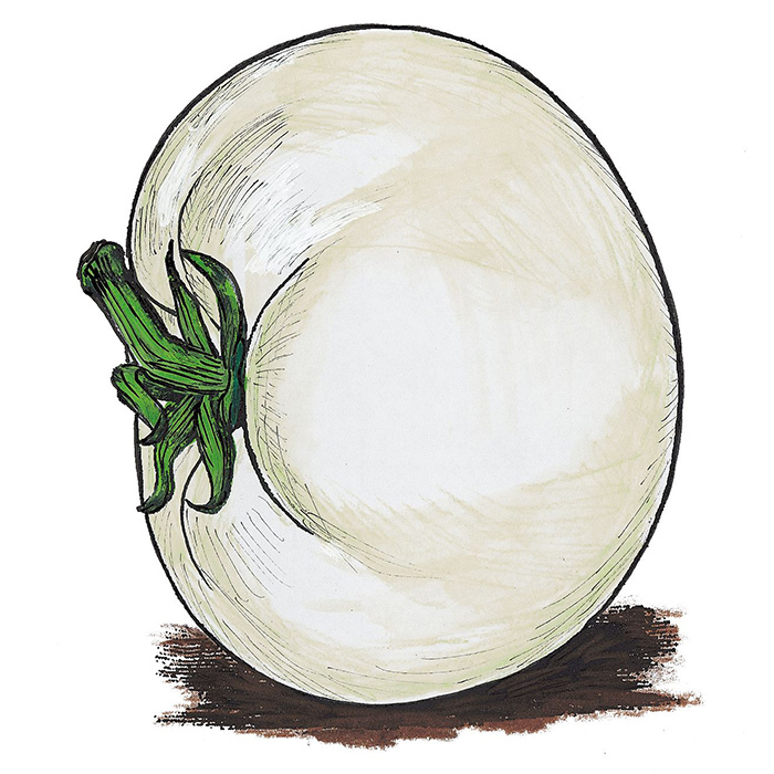 White Snowball Tomato