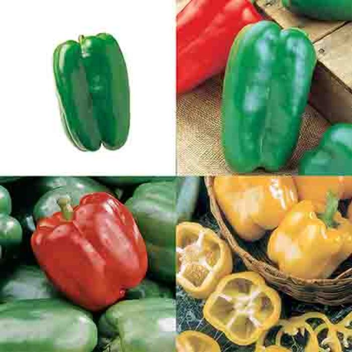 Giant Sweet Pepper Collection