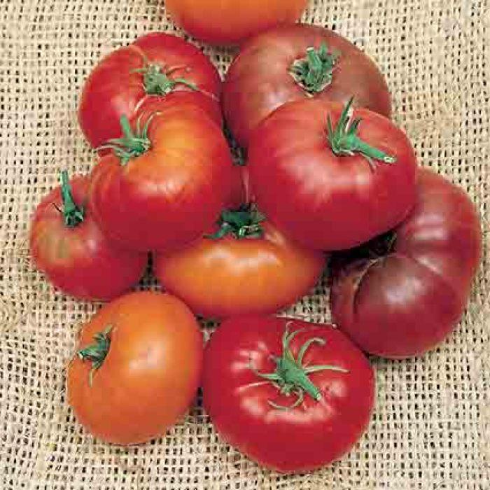 Brandywine Tomato Collection
