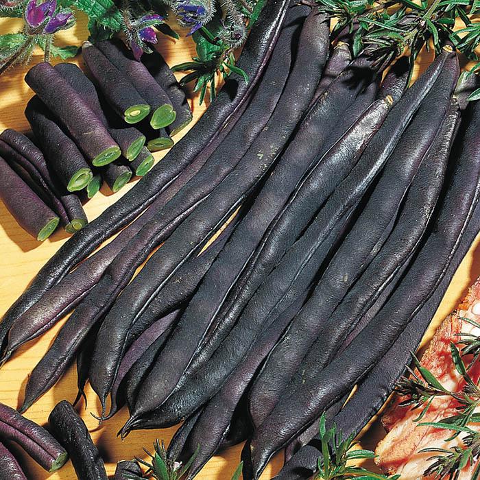 Purple Podded Pole Bean