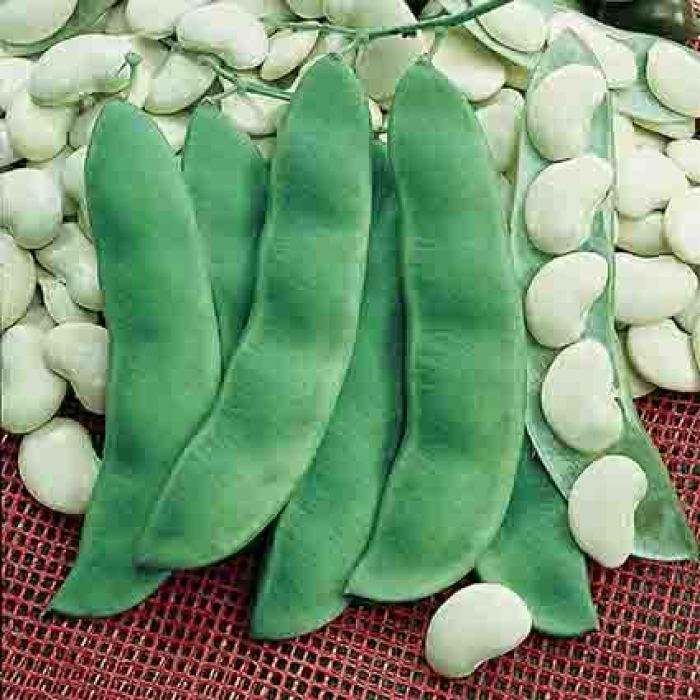 King Of The Garden Pole Lima Bean