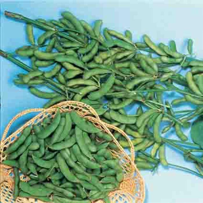 Be Sweet Edible Soybean