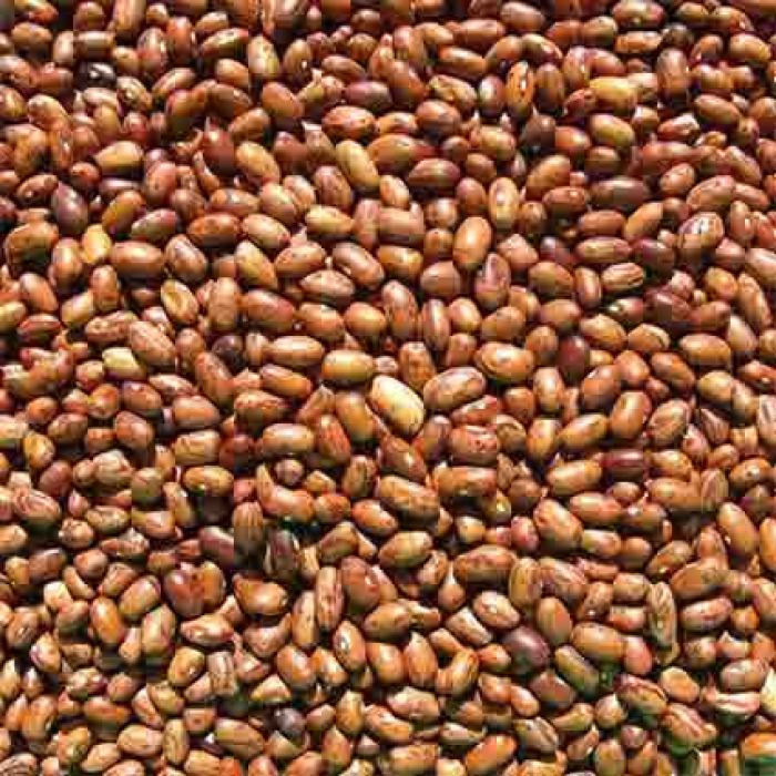 Vermont Cranberry Bean