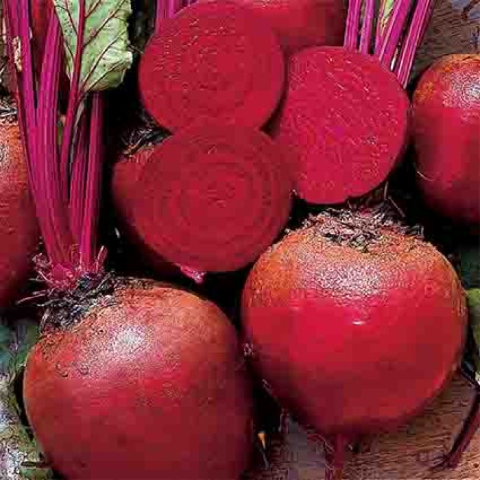 Improved Detroit Dark Red Beet