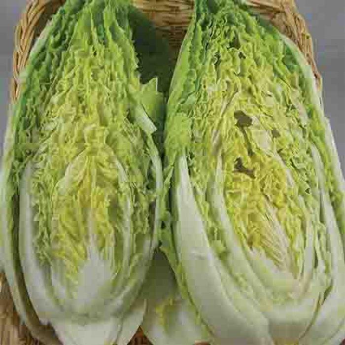 Michihili Chinese Napa Cabbage