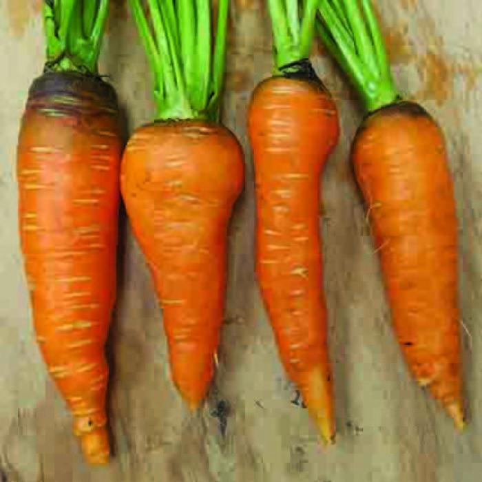 Flakkee Carrot