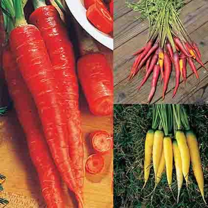 Crazy Colored Carrot Collection