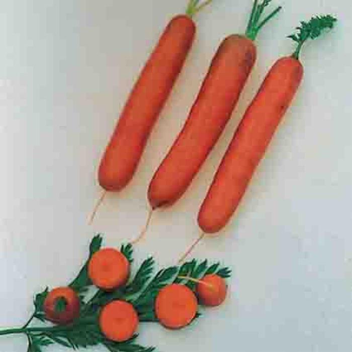 Little Finger Baby Carrot
