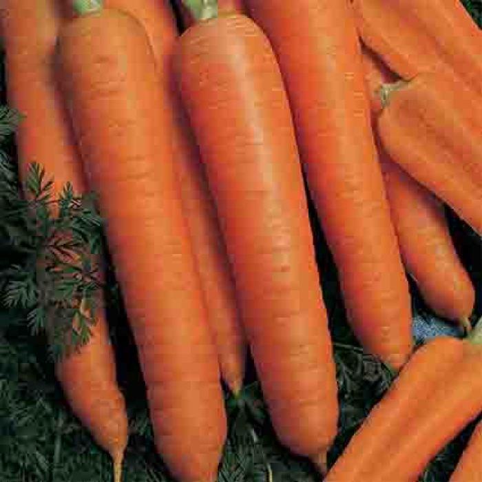 Napoli Hybrid Carrot