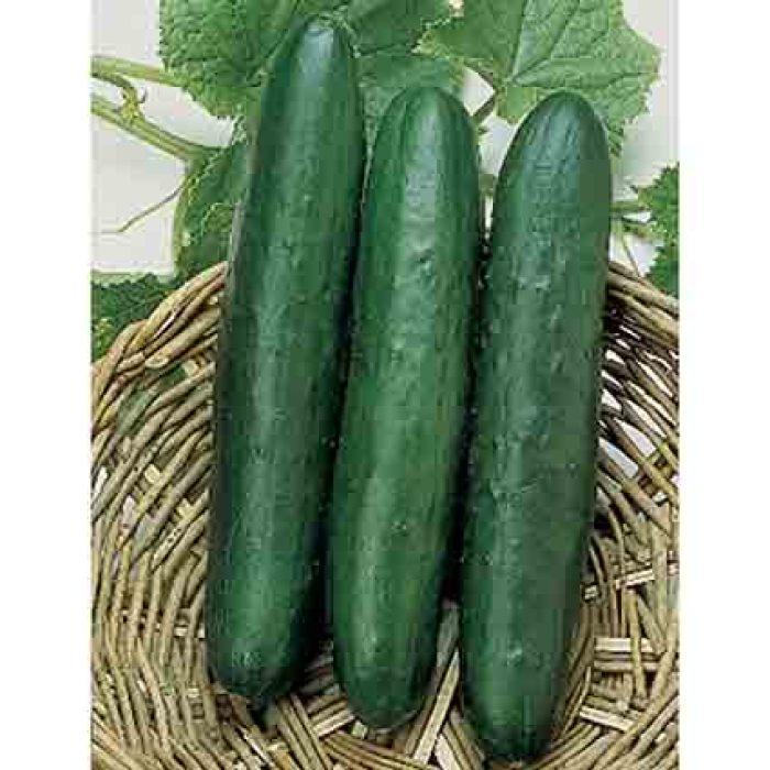 Sweet Slice Hybrid Cucumber