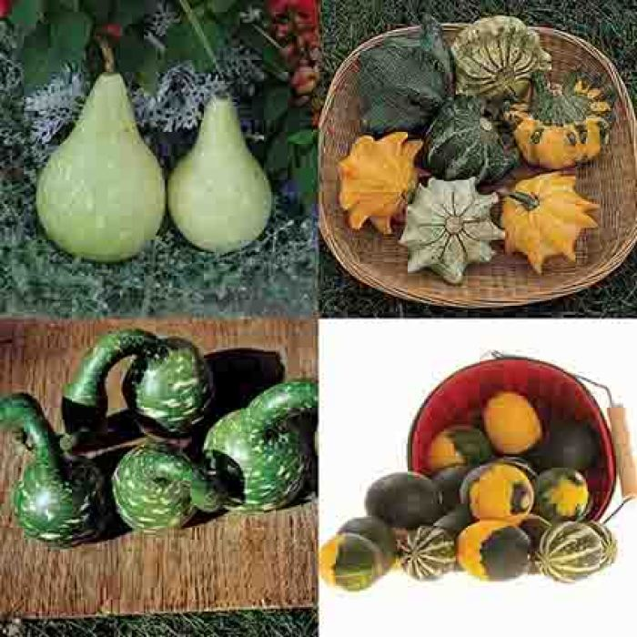 Finest Mix Of Small And Large Types Gourds
