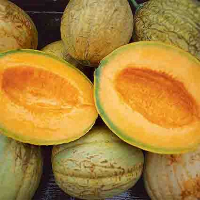 Amish Muskmelon