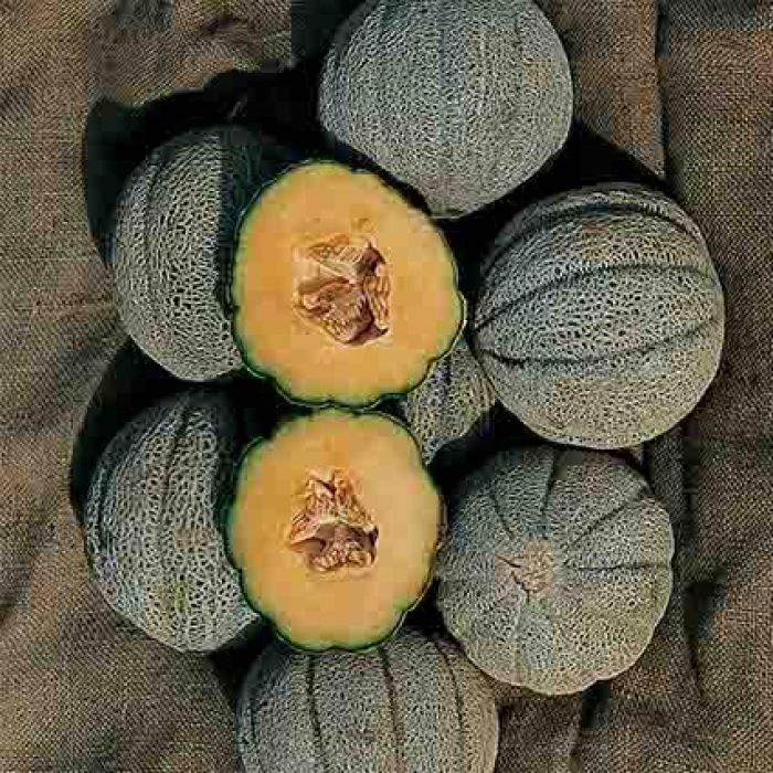 Hearts Of Gold Muskmelon