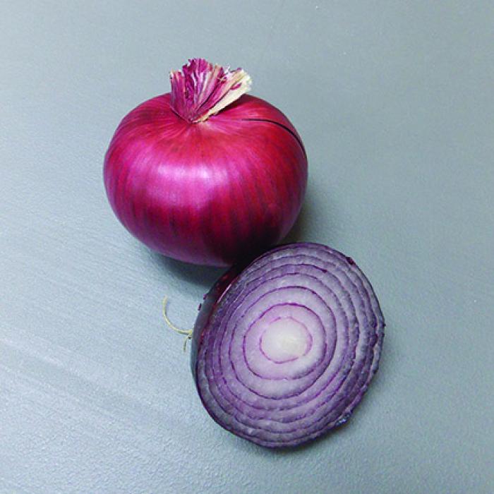 Red Bull Hybrid Onion Plants