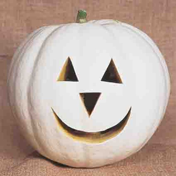 Lumina White Skinned Pumpkin