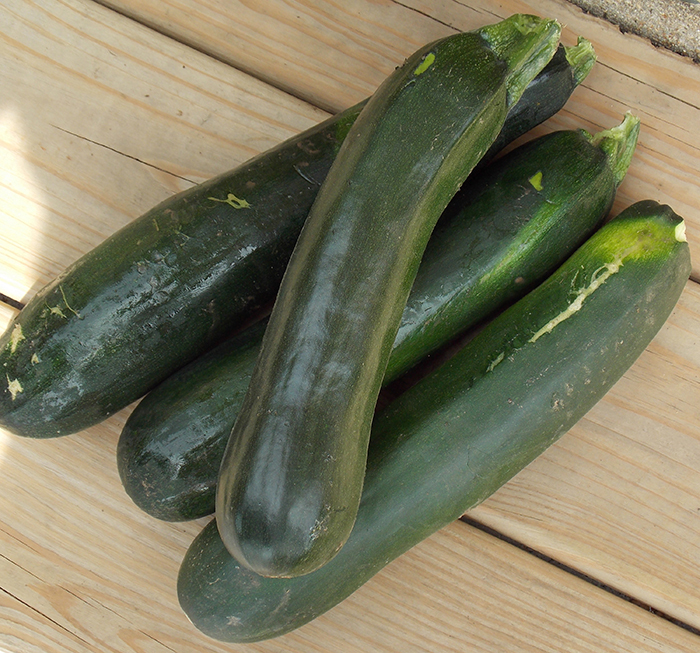 Fordhook Zucchini Squash