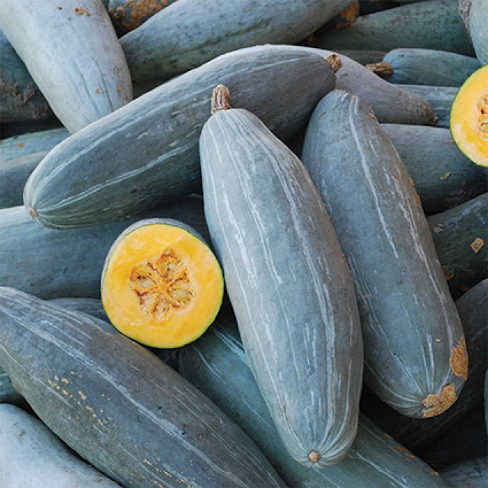 Guatemalan Blue Banana Winter Squash