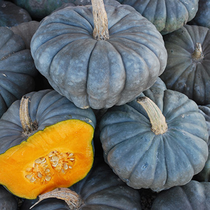 Queensland Blue Winter Squash