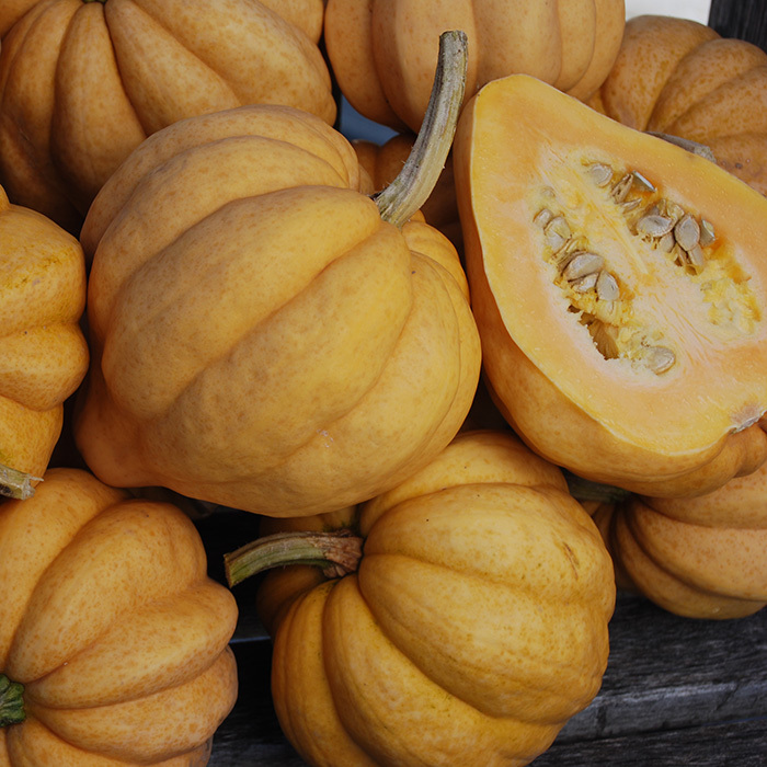 Thelma Sander's Sweet Potato Winter Squash