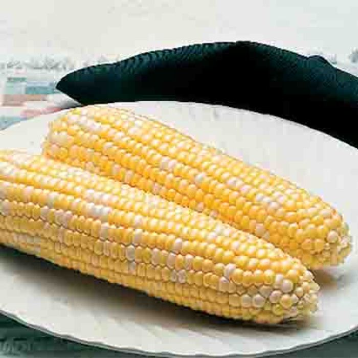 Delectable Se Sweet Corn