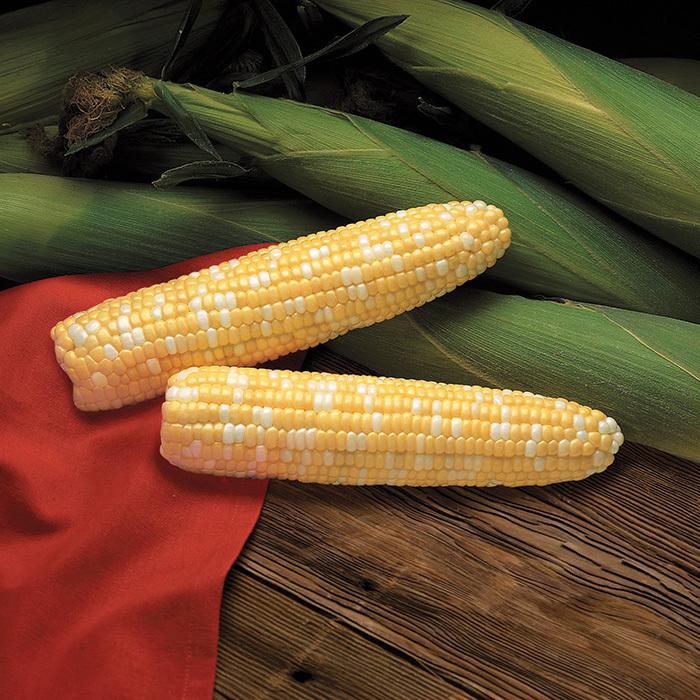 Primus Hybrid Sweet Corn