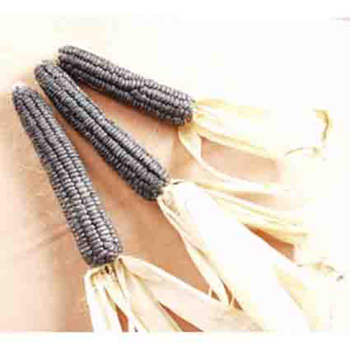 Black Aztec Sweet Corn