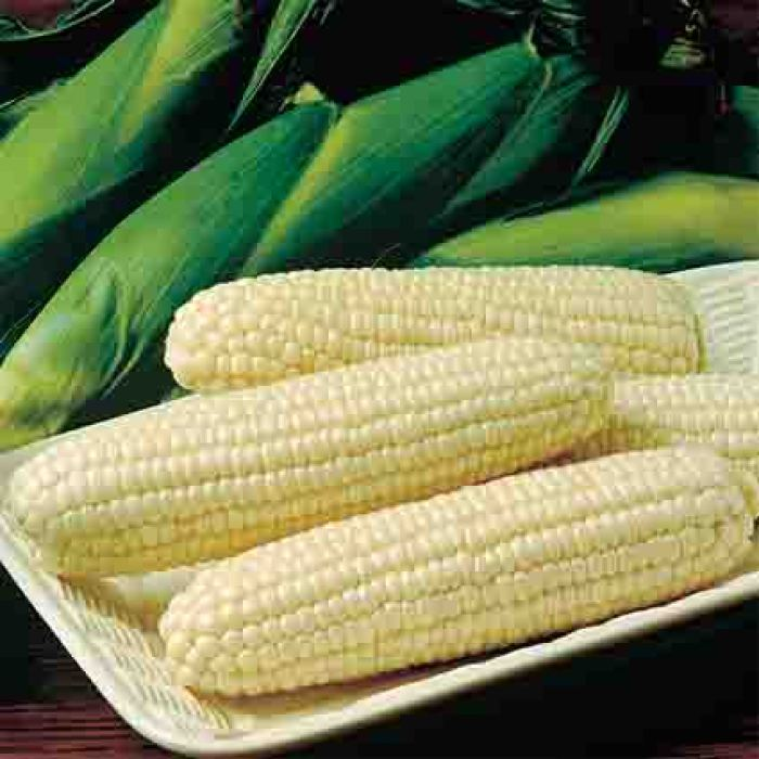Frosty Sweet Corn