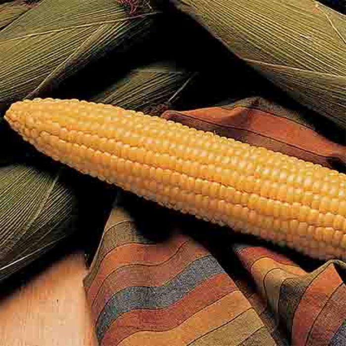 Honey Select Hybrid Sweet Corn