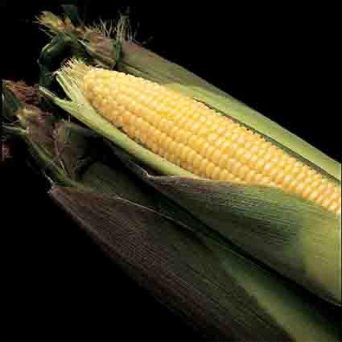Kandy Korn E.H. Sweet Corn