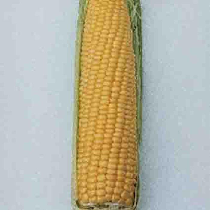 Nk 199 Hybrid Sweet Corn