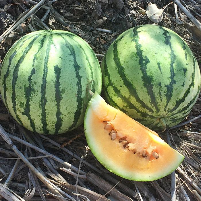 Clay County Watermelon