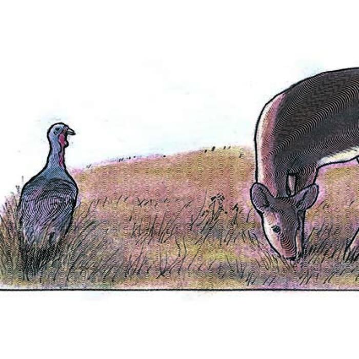 Keystone Deer And Turkey Seed Mix