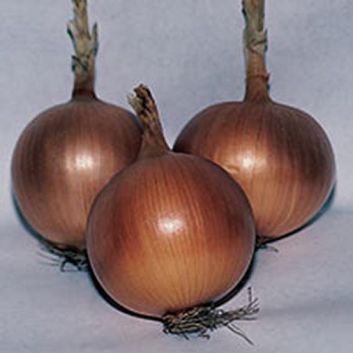 Texas 1015y Supersweet Onion