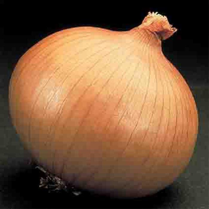 Yellow Granex Onion Plants