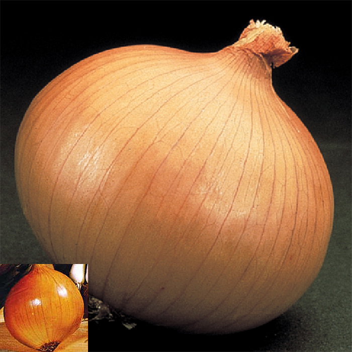 Onion Plant Collection - 1 Bunch Of 2 Varieties