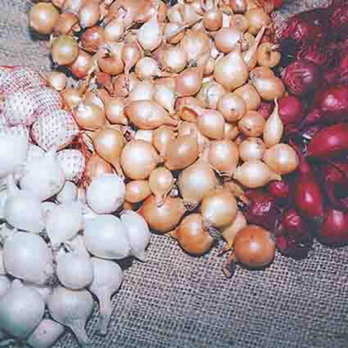 Onion Set Offer