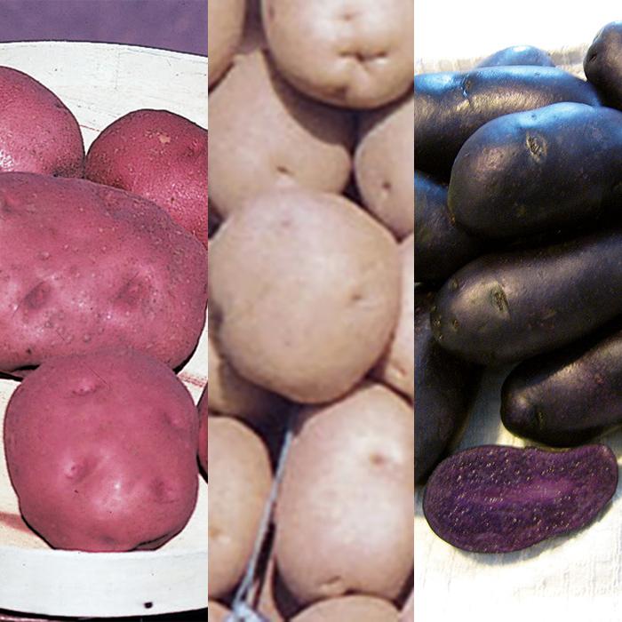 Red, White & Blue Potato Offer
