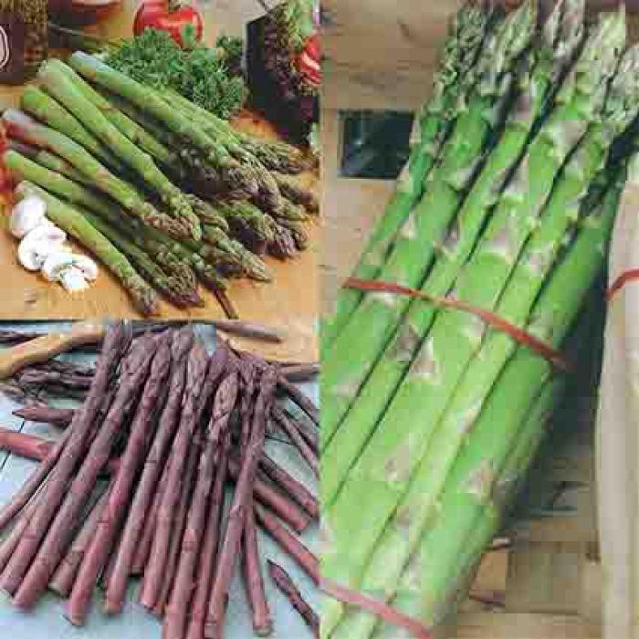 Complete Asparagus Garden
