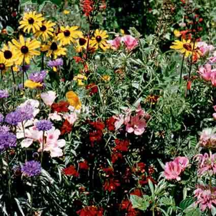 Bird And Butterfly Wildflower Mix