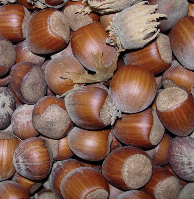 Gamma Hazelnuts