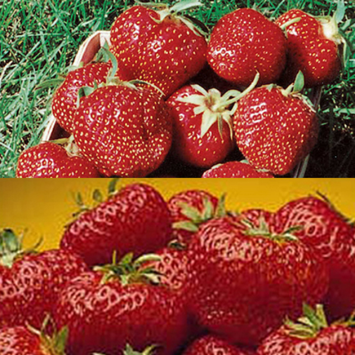 Strawberries Offer