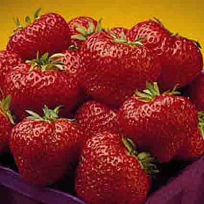 Cavendish Strawberry