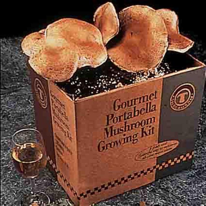 Gourmet Portabella Mushrooms