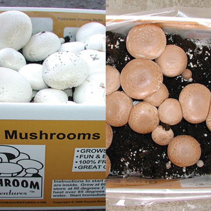 Mushroom Lover's Special