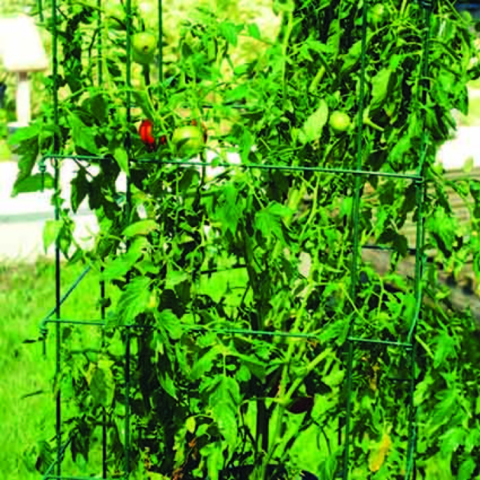 Jumbo Green Tomato Cages 2 Count