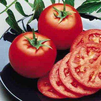 Bush Goliath Hybrid Tomato