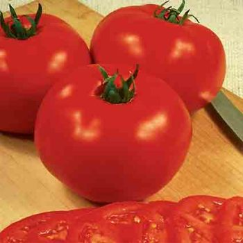 Original Abraham Lincoln Tomato