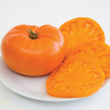 Orange Brandywine Tomato