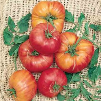 German Johnson Pink Tomato